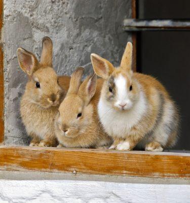 Conigli e conigli nani