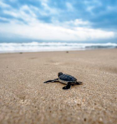 Pesci e tartarughe