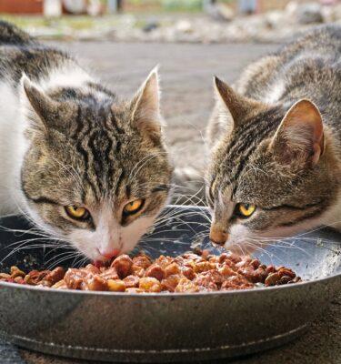 Bocconi per gatto